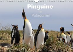 Pinguine in Patagonien (Wandkalender 2019 DIN A4 quer) von Göb,  Clemens, Köhler,  Ute