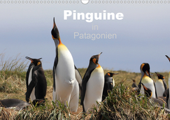 Pinguine in Patagonien (Wandkalender 2020 DIN A3 quer) von Göb,  Clemens, Köhler,  Ute