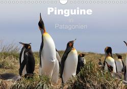 Pinguine in Patagonien (Wandkalender 2020 DIN A4 quer) von Göb,  Clemens, Köhler,  Ute