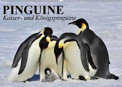 Pinguine – Kaiser- und Königspinguine (Wandkalender 2018 DIN A2 quer) von Stanzer,  Elisabeth