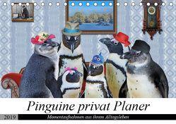 Pinguine privat Planer (Tischkalender 2019 DIN A5 quer) von glandarius,  Garrulus