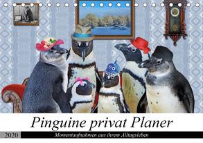 Pinguine privat Planer (Tischkalender 2020 DIN A5 quer) von glandarius,  Garrulus