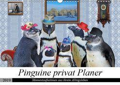Pinguine privat Planer (Wandkalender 2019 DIN A3 quer) von glandarius,  Garrulus