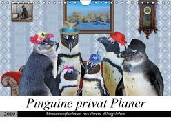Pinguine privat Planer (Wandkalender 2019 DIN A4 quer) von glandarius,  Garrulus