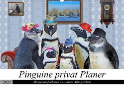 Pinguine privat Planer (Wandkalender 2021 DIN A2 quer) von glandarius,  Garrulus