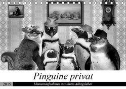 Pinguine privat (Tischkalender 2019 DIN A5 quer)