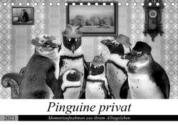 Pinguine privat (Tischkalender 2021 DIN A5 quer) von glandarius,  Garrulus