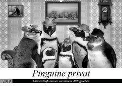 Pinguine privat (Wandkalender 2019 DIN A2 quer)