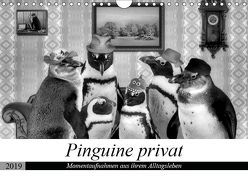 Pinguine privat (Wandkalender 2019 DIN A4 quer)