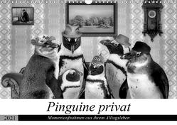 Pinguine privat (Wandkalender 2021 DIN A3 quer) von glandarius,  Garrulus