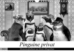 Pinguine privat (Wandkalender 2021 DIN A4 quer) von glandarius,  Garrulus