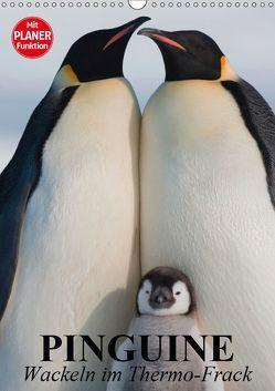 Pinguine. Wackeln im Thermo-Frack (Wandkalender 2019 DIN A3 hoch) von Stanzer,  Elisabeth