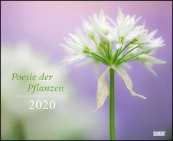 Poesie der Pflanzen 2020 – DUMONT Garten-Kalender – Querformat 52 x 42,5 cm – Spiralbindung von DUMONT Kalenderverlag, Nature Picture Library