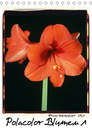 Polacolor Blumen 1 (Tischkalender 2021 DIN A5 hoch) von Huempfner,  Franz