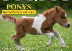 Ponys. Herzensbrecher mit Grips (Wandkalender 2019 DIN A2 quer) von Stanzer,  Elisabeth