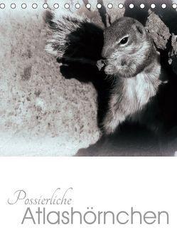 Possierliche Atlashörnchen (Tischkalender 2019 DIN A5 hoch) von M. Laube,  Lucy