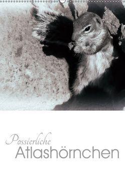 Possierliche Atlashörnchen (Wandkalender 2019 DIN A2 hoch) von M. Laube,  Lucy