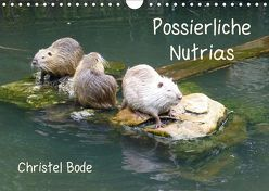 Possierliche Nutrias (Wandkalender 2019 DIN A4 quer) von Bode,  Christel