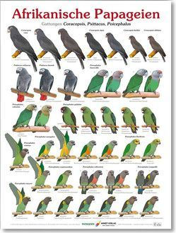 Poster Afrikanische Papageien von Arndt,  Thomas