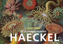 Postkartenbuch Ernst Haeckel von Haeckel,  Ernst