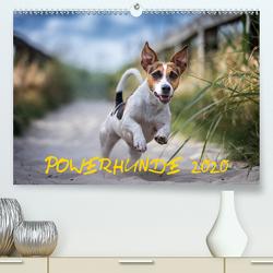 POWERHUNDE 2020 (Premium, hochwertiger DIN A2 Wandkalender 2020, Kunstdruck in Hochglanz) von Mirsberger,  Annett