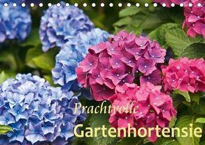 Prachtvolle Gartenhortensie (Tischkalender 2018 DIN A5 quer) von Keller,  Bernd