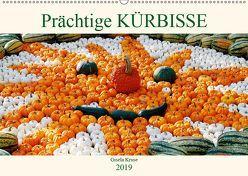 Prächtige Kürbisse (Wandkalender 2019 DIN A2 quer) von Kruse,  Gisela