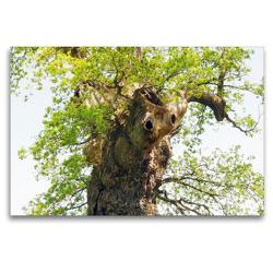 Premium Textil-Leinwand 120 x 80 cm Quer-Format Alter Baum mit Charakter | Wandbild, HD-Bild auf Keilrahmen, Fertigbild auf hochwertigem Vlies, Leinwanddruck von Gisela Kruse