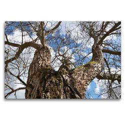 Premium Textil-Leinwand 120 x 80 cm Quer-Format Am Forsthaus Thiemsburg | Wandbild, HD-Bild auf Keilrahmen, Fertigbild auf hochwertigem Vlies, Leinwanddruck von Flori0
