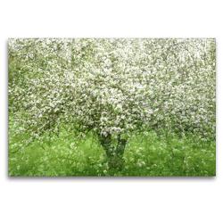 Premium Textil-Leinwand 120 x 80 cm Quer-Format Apfelbaum | Wandbild, HD-Bild auf Keilrahmen, Fertigbild auf hochwertigem Vlies, Leinwanddruck von Franziska Lenferink