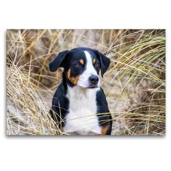 Premium Textil-Leinwand 120 x 80 cm Quer-Format Appenzeller Sennenhund | Wandbild, HD-Bild auf Keilrahmen, Fertigbild auf hochwertigem Vlies, Leinwanddruck von SchnelleWelten