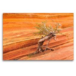 Premium Textil-Leinwand 120 x 80 cm Quer-Format Bäume in der Welt, the Wave Arizona | Wandbild, HD-Bild auf Keilrahmen, Fertigbild auf hochwertigem Vlies, Leinwanddruck von Björn Alicke