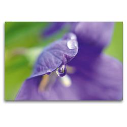 Premium Textil-Leinwand 120 x 80 cm Quer-Format Ballonblume | Wandbild, HD-Bild auf Keilrahmen, Fertigbild auf hochwertigem Vlies, Leinwanddruck von Susanne Herppich