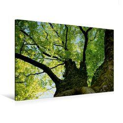 Premium Textil-Leinwand 120 x 80 cm Quer-Format Baumkrone | Wandbild, HD-Bild auf Keilrahmen, Fertigbild auf hochwertigem Vlies, Leinwanddruck von Susan Michel / CH von Michel / CH,  Susan