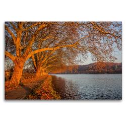 Premium Textil-Leinwand 120 x 80 cm Quer-Format Baumreihe am Baldeneysee bei Haus Scheppen im Herbstlicht   Wandbild, HD-Bild auf Keilrahmen, Fertigbild auf hochwertigem Vlies, Leinwanddruck von Rolf Hitzbleck