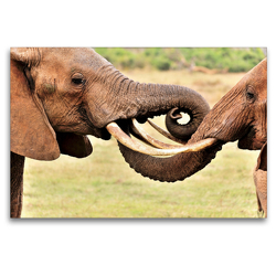 Premium Textil-Leinwand 120 x 80 cm Quer-Format Begrüßung zweier Elefanten | Wandbild, HD-Bild auf Keilrahmen, Fertigbild auf hochwertigem Vlies, Leinwanddruck von Jürgen Feuerer