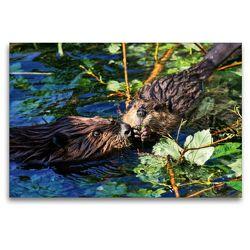 Premium Textil-Leinwand 120 x 80 cm Quer-Format Biber Kuss | Wandbild, HD-Bild auf Keilrahmen, Fertigbild auf hochwertigem Vlies, Leinwanddruck von Kattobello