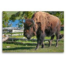 Premium Textil-Leinwand 120 x 80 cm Quer-Format Bison im Yellowstone Nat'l Park | Wandbild, HD-Bild auf Keilrahmen, Fertigbild auf hochwertigem Vlies, Leinwanddruck von Dieter-M. Wilczek