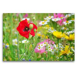 Premium Textil-Leinwand 120 x 80 cm Quer-Format Bunte Blumenwiese | Wandbild, HD-Bild auf Keilrahmen, Fertigbild auf hochwertigem Vlies, Leinwanddruck von Sabine Löwer