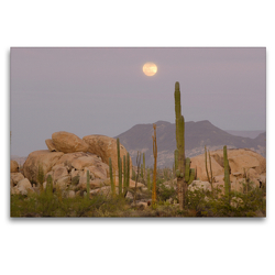 Premium Textil-Leinwand 120 x 80 cm Quer-Format Cardon and Cirio Cactus with Boulder Rocks near Catavinia, Baja California, Mexico | Wandbild, HD-Bild auf Keilrahmen, Fertigbild auf hochwertigem Vlies, Leinwanddruck von Christian Heeb