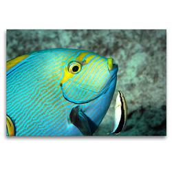 Premium Textil-Leinwand 120 x 80 cm Quer-Format Der Augenfleck-Doktorfisch lässt sich gerne putzen! | Wandbild, HD-Bild auf Keilrahmen, Fertigbild auf hochwertigem Vlies, Leinwanddruck von Ute Niemann