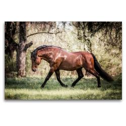 Premium Textil-Leinwand 120 x 80 cm Quer-Format Die Faszinierende Welt der Pferde | Wandbild, HD-Bild auf Keilrahmen, Fertigbild auf hochwertigem Vlies, Leinwanddruck von Sabrina Mischnik