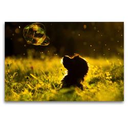 Premium Textil-Leinwand 120 x 80 cm Quer-Format dogs bubble | Wandbild, HD-Bild auf Keilrahmen, Fertigbild auf hochwertigem Vlies, Leinwanddruck von boris robert