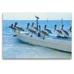 Premium Textil-Leinwand 120 x 80 cm Quer-Format Drollige Pelikane lassen sich auf einem Fischerboot nieder | Wandbild, HD-Bild auf Keilrahmen, Fertigbild auf hochwertigem Vlies, Leinwanddruck von CALVENDO