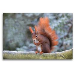 Premium Textil-Leinwand 120 x 80 cm Quer-Format Eichhörnchen im Winterpelz   Wandbild, HD-Bild auf Keilrahmen, Fertigbild auf hochwertigem Vlies, Leinwanddruck von Margret Brackhan