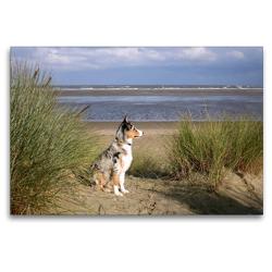Premium Textil-Leinwand 120 x 80 cm Quer-Format Ein Hund beobachtet den Strand | Wandbild, HD-Bild auf Keilrahmen, Fertigbild auf hochwertigem Vlies, Leinwanddruck von Susanne Herppich