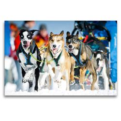 Premium Textil-Leinwand 120 x 80 cm Quer-Format Ein Schlittenhunde-Gespann voller Begeisterung beim Rennen | Wandbild, HD-Bild auf Keilrahmen, Fertigbild auf hochwertigem Vlies, Leinwanddruck von CALVENDO