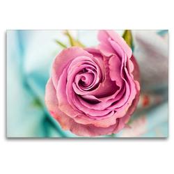 Premium Textil-Leinwand 120 x 80 cm Quer-Format Eine bezaubernde Rose   Wandbild, HD-Bild auf Keilrahmen, Fertigbild auf hochwertigem Vlies, Leinwanddruck von Rose Hurley