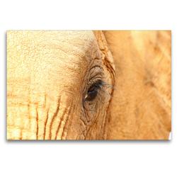 Premium Textil-Leinwand 120 x 80 cm Quer-Format Elefantenauge   Wandbild, HD-Bild auf Keilrahmen, Fertigbild auf hochwertigem Vlies, Leinwanddruck von Barbara Fraatz