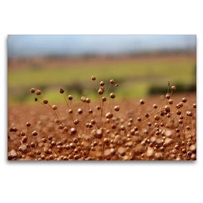 Premium Textil-Leinwand 120 x 80 cm Quer-Format Flachs | Wandbild, HD-Bild auf Keilrahmen, Fertigbild auf hochwertigem Vlies, Leinwanddruck von Flori0